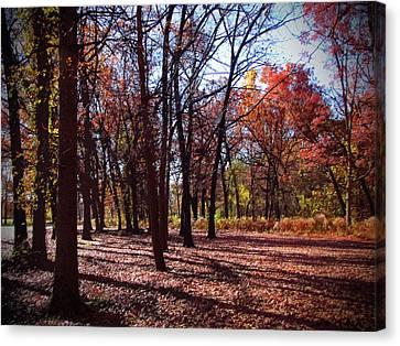 Fall Tree Shadows 2 Canvas Print by Cedric Hampton