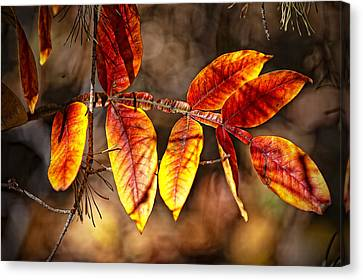 Fall Trees Number One Canvas Print by Michael Putnam