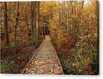 Fall Walk Canvas Print by Debbie Oppermann