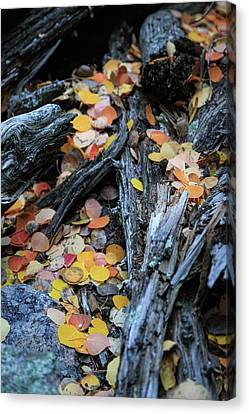 Canvas Print featuring the photograph Fallen by David Chandler
