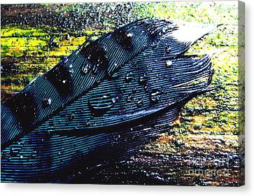 Fallen Feather Canvas Print by Thomas R Fletcher