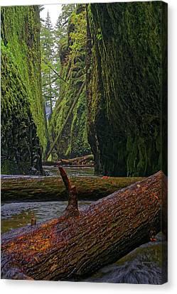 Fallen Canvas Print by Jonathan Davison