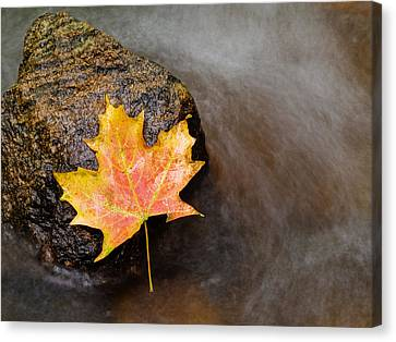 Niagra Falls Canvas Print - Fallen Leaf by Jim DeLillo
