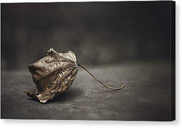Muted Canvas Print - Fallen Leaf by Scott Norris