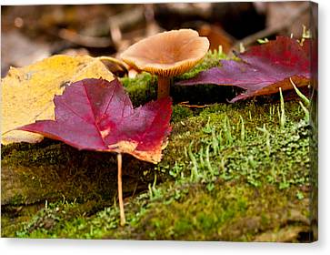 Fallen Leaves And Mushrooms Canvas Print