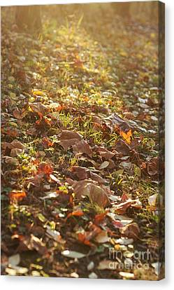 Fallen Leaves At Sunset Canvas Print by Hideaki Sakurai