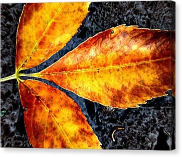 Fallen Leaves Canvas Print by Beth Akerman