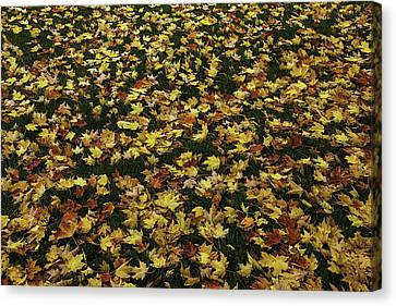 Fallen Leaves Canvas Print by Garry Gay