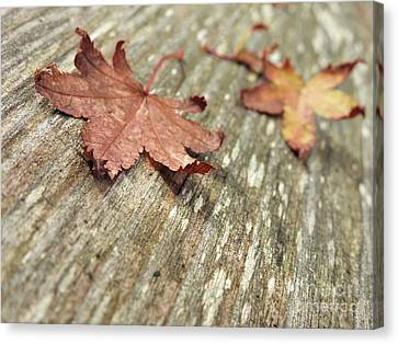 Canvas Print featuring the photograph Fallen Leaves by Peggy Hughes