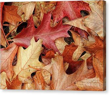 Canvas Print featuring the photograph Fallen by Peggy Hughes