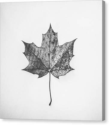 Fallen Red In Monochrome Canvas Print