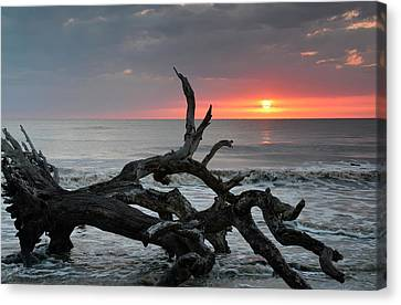 Fallen Tree In Ocean At Sunrise Canvas Print by Bruce Gourley