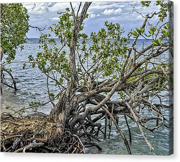Canvas Print featuring the photograph Fallen Tree by Linda Constant
