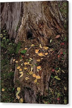 Fallen Tree Offerings Canvas Print