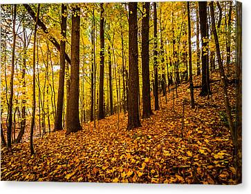 Canvas Print featuring the photograph Fallgenic by Robert Clifford