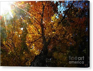 Sun Rays Canvas Print - Falling Light by David Lee Thompson