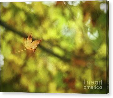 Canvas Print featuring the photograph Falling by Peggy Hughes