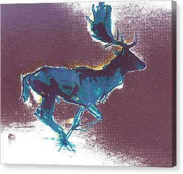 Fallow Buck Canvas Print by Mark Adlington
