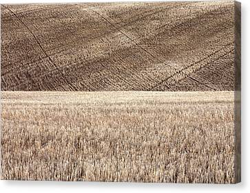 Fallow Field Canvas Print
