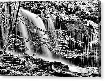 Falls And Trees Canvas Print