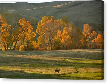 Canvas Print featuring the photograph Falls Reward.. by Al Swasey