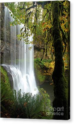 Falls Though The Trees Canvas Print by Adam Jewell