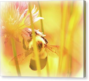 Fame Is A Bee Canvas Print by Bob Orsillo