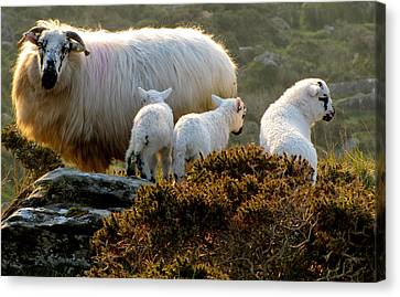 Family Canvas Print by Barbara Walsh