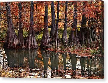 Canvas Print featuring the photograph Family Of Cypress At Lake Murray by Tamyra Ayles