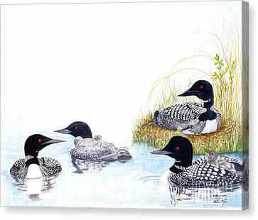 Family Of Loons Canvas Print by Pauline Ross