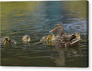 Family Ties 2 Canvas Print by Fraida Gutovich