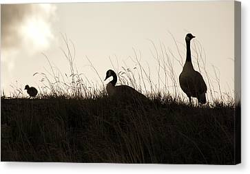 Family Time Canvas Print by Marilyn Hunt