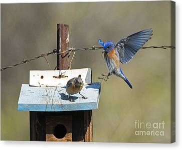 Family Time Canvas Print by Mike Dawson