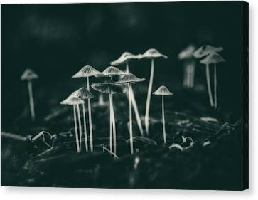 Toadstools Canvas Print - Fanciful Fungus by Tom Mc Nemar