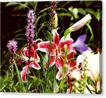 Fancy Lilies In Garden Canvas Print