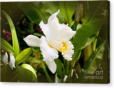 Kenneth Johnson Canvas Print - Fancy Orchid by Kenneth Johnson