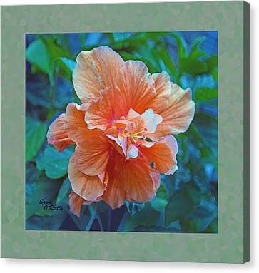 Fancy Peach Hibiscus Canvas Print by Sandi OReilly