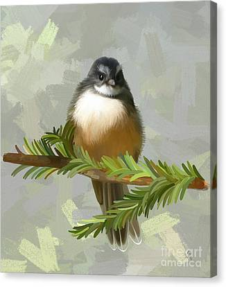 Fantail  Canvas Print by Ivana Westin