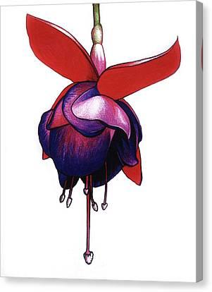Fantastic Fuchsia Canvas Print