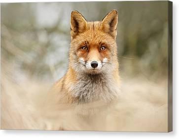 Fantastic Mr Fox Canvas Print by Roeselien Raimond