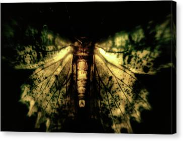 Fantastical Moth Canvas Print by Mother Nature