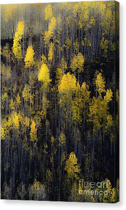 Canvas Print featuring the photograph Far And Away by The Forests Edge Photography - Diane Sandoval