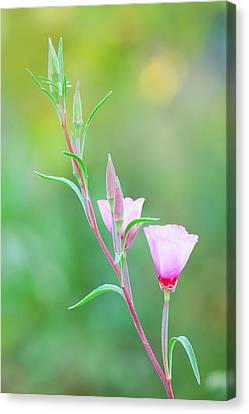 Canvas Print featuring the photograph Farewell To Spring by Ram Vasudev