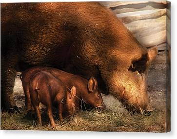 Farm - Pig - Family Bonds Canvas Print by Mike Savad
