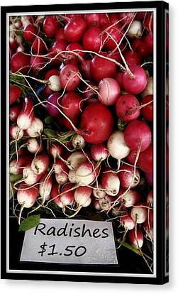 Farm Fresh Radishes Canvas Print