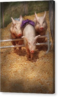Farm - Pig - Getting Past Hurdles Canvas Print by Mike Savad