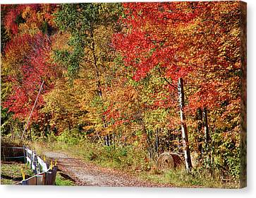 Canvas Print featuring the photograph Farmers Path Of Fall Colors by Jeff Folger