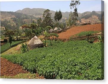 Farming Communities, Guge Mountains, Ethiopia Canvas Print by Aidan Moran