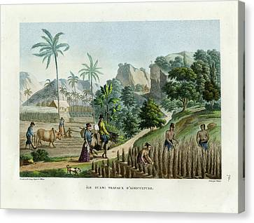 Farming On Guam Island Canvas Print by d apres Pellion