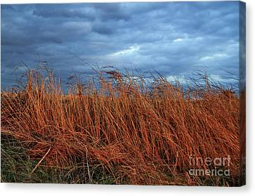 Farmland Winter Canvas Print by Susan Yates